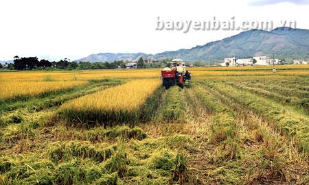 Cơ giới hóa trên cánh đồng Đại - Phú - An.