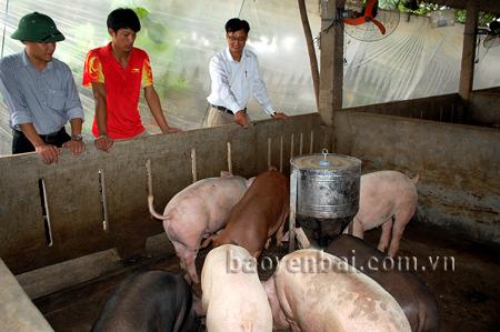 Xã Đại Phác ngày càng có nhiều mô hình kinh tế hiệu quả, góp phần đẩy nhanh tiến độ xây dựng nông thôn mới. (Trong ảnh: Mô hình chăn nuôi lợn, của gia đình anh Đoàn Văn Việt, thôn 3 mang lại hiệu quả kinh tế cao).