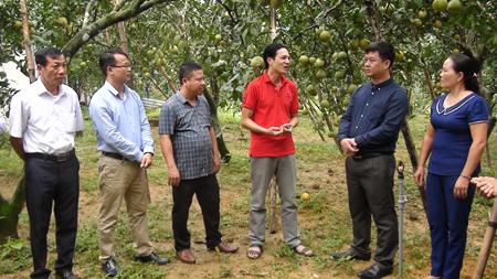 Lãnh đạo huyện Yên Bình thăm vườn bưởi của gia đình anh Cao Văn Mạnh ở thôn Đồng Nếp, xã Đại Minh.
