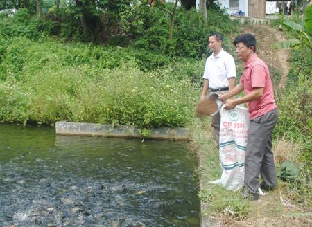 Mô hình phát triển kinh tế mang lại hiệu quả cao của CCB Nguyễn Ngọc Thắm.