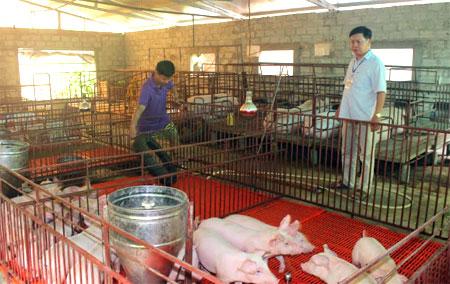 Mô hình chăn nuôi theo hướng hàng hóa tại xã Văn Phú đem lại hiệu quả kinh tế cao.