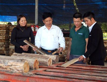 Chế biến gỗ rừng trồng của các doanh nghiệp trên địa bàn tỉnh mang lại hiệu quả kinh tế cao, đóng góp vào tăng thu ngân sách và giải quyết việc làm cho lao động địa phương.