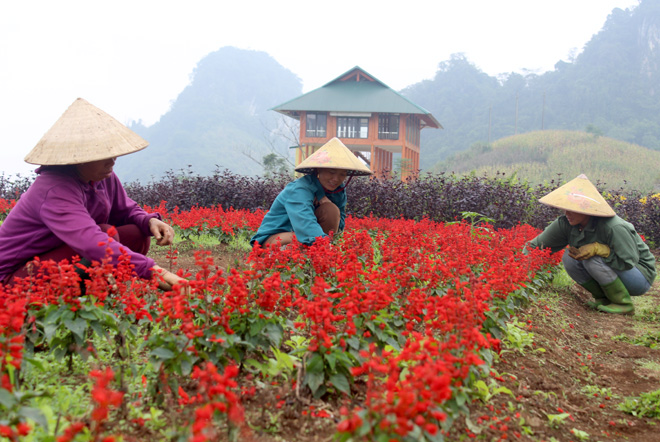 Trồng mới thêm hoa, tạo cảnh quan khu vực Bình nguyên xanh Khai Trung
