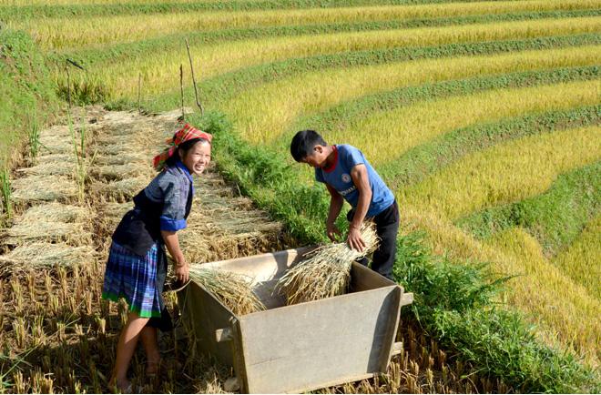 Bình quân lương thực đầu người của huyện đã đạt 670kg/năm, tăng 245kg/người/năm so với năm 2011.