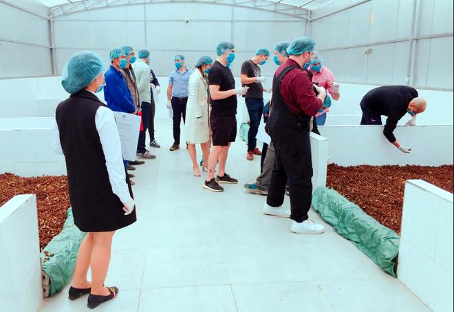 Đoà n khảo sát của Pháp thực tế quy trình trồng, chăm sóc, thu hoạch, chế biến các sản phẩm quế của Hợp tác xã Quế hồi Việt Nam, huyện Trấn Yên.