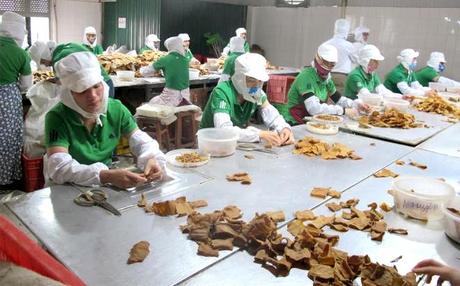 Sơ chế măng xuất khẩu ở Công ty cổ phần Yên Thành.