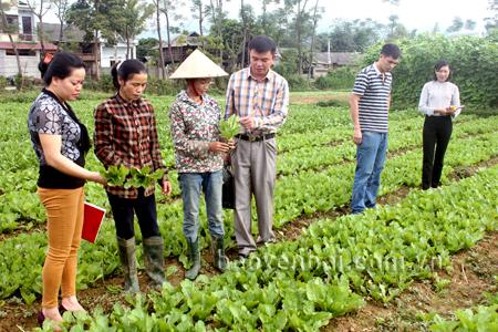 Lãnh đạo xã Phù Nham thăm mô hình trồng rau sạch tại thôn Noong Ỏ.