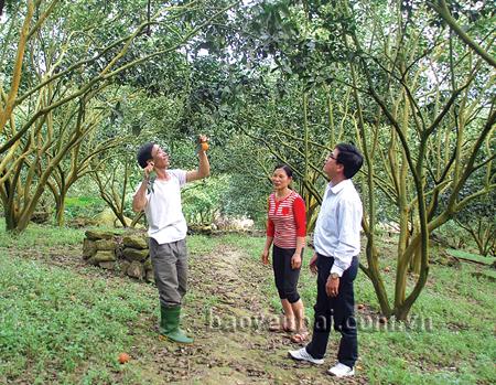 Anh Trịnh Văn Hưng giới thiệu về giống cam sành Lục Yên.  (Ảnh: Văn Tuấn)