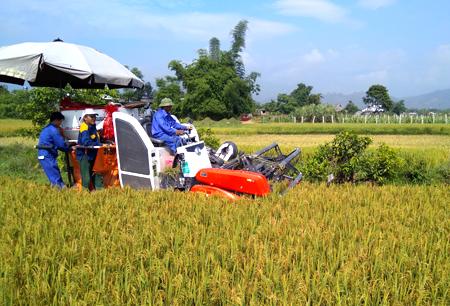 Thu hoạch lúa tại xã Thanh Lương.