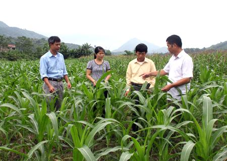 Lãnh đạo xã Minh Chuẩn kiểm tra phát triển sản xuất nông nghiệp.