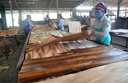 Sản xuất ván bóc tại Công ty cổ phần Yên Thành, huyện Yên Bình.