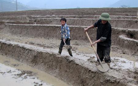 Nhân dân xã Chế Cu Nha làm đất gieo cấy lúa xuân.