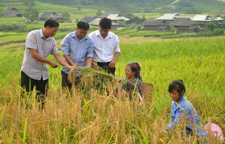 Lãnh đạo xã Cao Phạ đôn đốc bà con khẩn trương thu hoạch vụ mùa, giải phóng đất cho sản xuất vụ đông xuân.