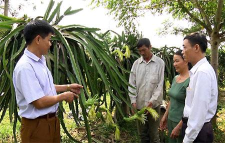 Lãnh đạo xã Vĩnh Kiên tham quan mô hình trồng thanh long tại thôn Đa Cốc.