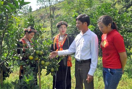 Lãnh đạo xã Tân Phượng trao đổi với nhân dân về kỹ thuật trồng, chăm sóc cam Vinh.