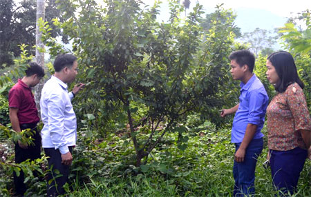 Lãnh đạo xã Vân Hội thăm một mô hình vườn cây ăn quả cho hiệu quả kinh tế cao.