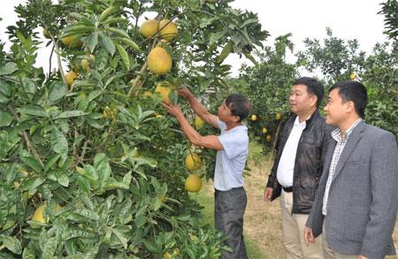 Xây dựng nông thôn mới đã hình thành nhiều vùng sản xuất hàng hóa quy mô lớn.