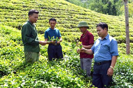 Bí thư Chi bộ thôn Khe Bon - Nguyễn Hữu Cảng (thứ 2, trái sang) cùng lãnh đạo xã Bình Thuận trao đổi với nhân dân về thâm canh chè.