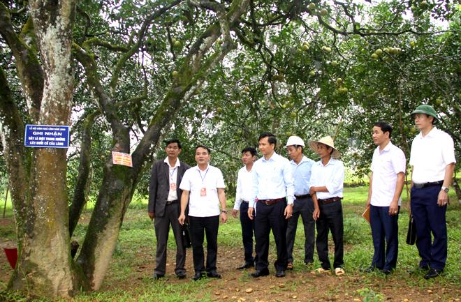 Ban giám khảo Hội thi chấm điểm vườn bưởi đẹp, cây bưởi đẹp tại các hộ gia đình.