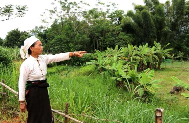 Bà Lò Thị Thịnh, thôn Bản Sa, xã Nghĩa Lợi bên thửa ruộng bỏ hoang từ mấy năm nay do không có nước sản xuất.