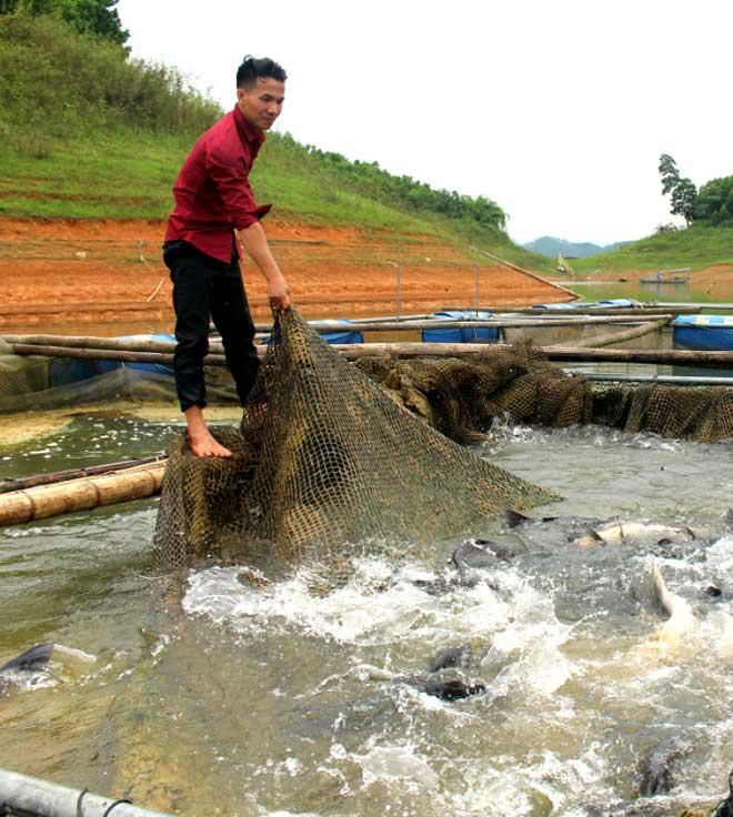 """Hứa Văn Quang bước đầu hiện thực hóa ước mơ """"làm chủ cuộc đời"""" với cá lồng hồ Thác Bà."""