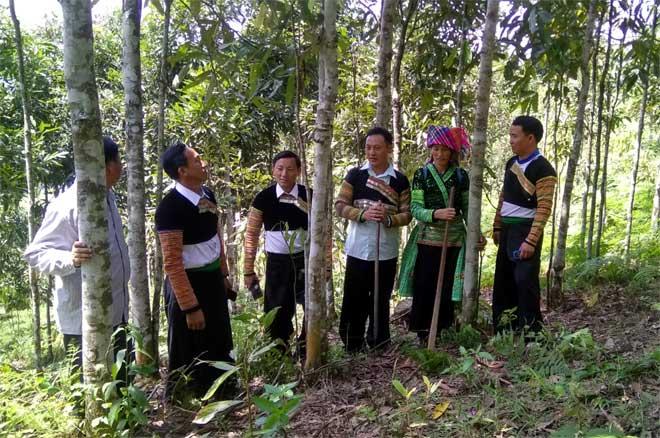 Hàng chục nghìn hộ đồng bào dân tộc thiểu số trên địa bàn tỉnh có thêm thu nhập từ nguồn kinh phí giao khoán chăm sóc, bảo vệ rừng