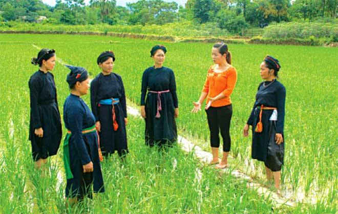 Bà con dân tộc thiểu số các xã vùng Đông hồ Thác Bà (Yên Bình) tích cực tiếp thu kiến thức khoa học kỹ thuật áp dụng vào sản xuất.