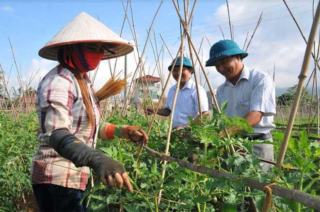 Hướng dẫn kỹ thuật trồng rau an toàn do Phòng lao động - Thương binh và Xã hội thị xã Nghĩa Lộ phối hợp tổ chức thu hút khá đông người lao động theo học.
