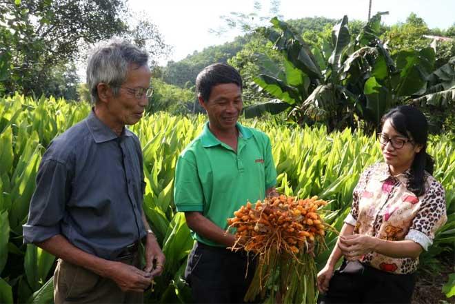 Ông Ngô Văn Tình, thôn Trấn Ninh, xã Tân Thịnh, thành phố Yên Bái (đứng giữa) trao đổi kinh nghiệm trồng nghệ với các hộ trong thôn.