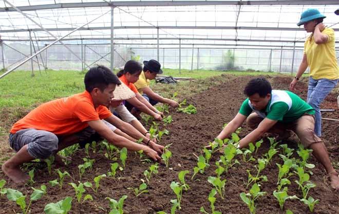 Cán bộ Hội Nông dân huyện tham gia ngày cùng dân trồng rau an toàn.