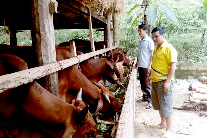 Từ đồng vốn tín dụng chính sách, nhiều hộ gia đình ở Trấn Yên đã vươn lên thoát nghèo.