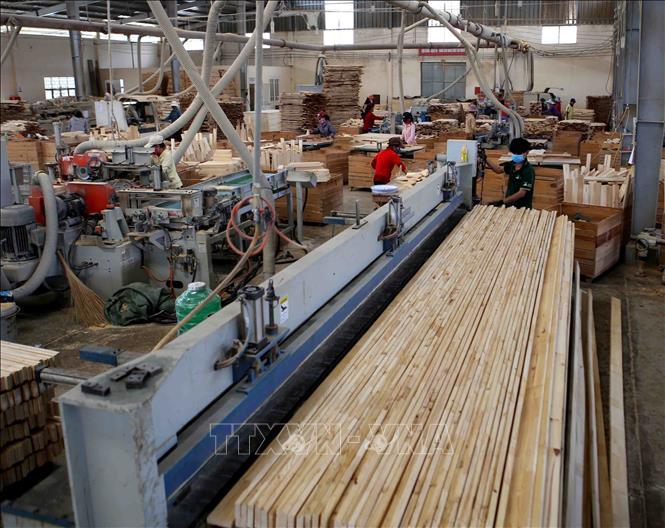 Sản xuất, chế biến gỗ tại Công ty TNHH khai thác, chế biến lâm sản Đà Lạt, Lâm Đồng.