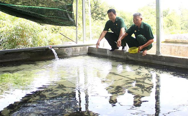 Cựu chiến binh Trần Cao Thắng (bên phải) chia sẻ kinh nghiệm nuôi cá tầm với lãnh đạo Hội CCB xã Việt Hồng.