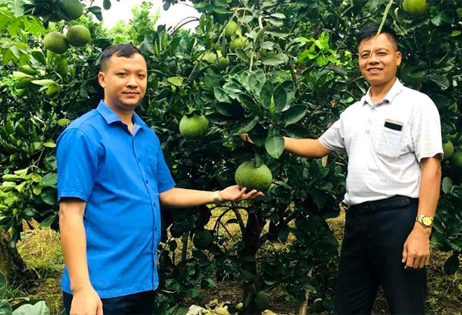 Đồng chí Lê Anh Tuấn - Chủ tịch UBND xã Hưng Thịnh (bên trái) tham quan mô hình trồng bưởi Diễn của ông Tằng Văn Quỳnh, thôn Yên Định.