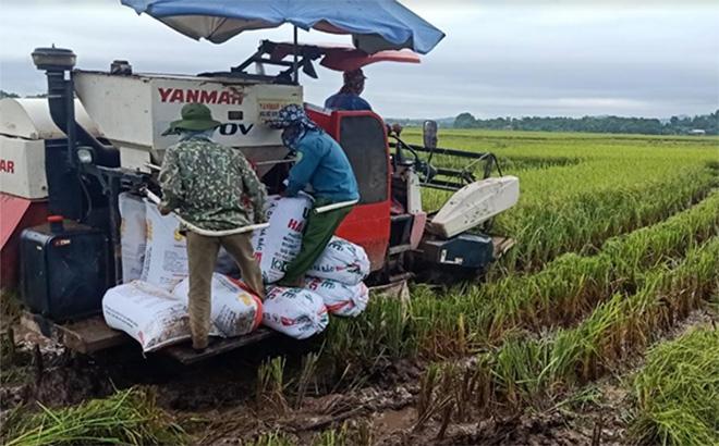 Nông dân Yên Bái cơ giới hóa sản xuất nông nghiệp.