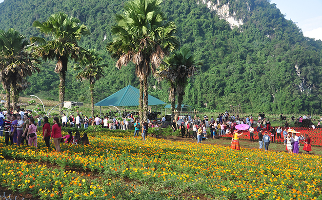 Khai Trung green plain is a destination for visitors when coming to Luc Yen district.