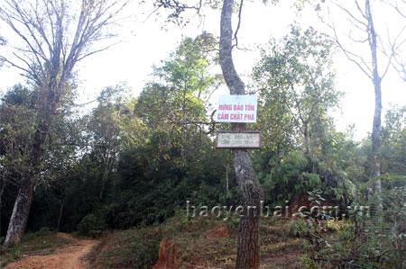 Cần tích cực tuyên truyền Luật Bảo vệ và Phát triển rừng để người dân nâng cao ý thức bảo vệ những cánh rừng nguyên sinh. (Ảnh: Hồng Duyên)