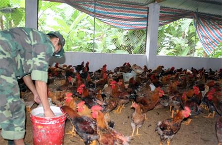 Chiến sỹ Trung đoàn 174 cho gà ăn.