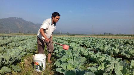 Nông dân xã Nghĩa An chăm sóc rau vụ đông trên đất 2 vụ lúa.