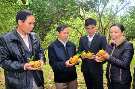 Các đồng chí lãnh đạo xã Khánh Hoà và thành viên HTX Cam sành Lục Yên thăm vườn cam của gia đình anh Nguyễn Thanh Sơn, thôn 5.