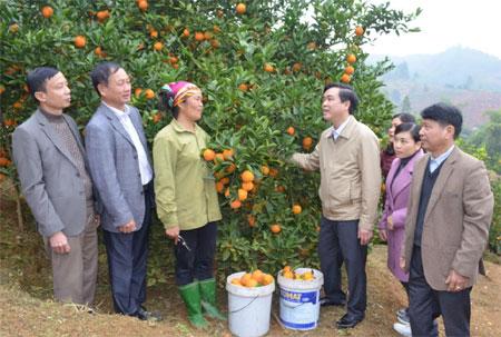 Lãnh đạo huyện Văn Chấn động viên người dân tích cực đầu tư phát triển vùng cây ăn quả có múi.