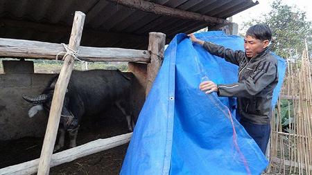 Rét đậm, rét hại có nguy cơ ảnh hưởng xấu đến sản xuất chăn nuôi ở nhiều khu vực.