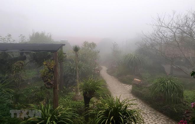 Sương mù dày đặc ảnh hưởng hoa màu và cây trồng tại thị trấn Sa Pa.