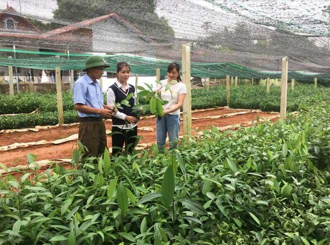 Một vườn ươm cây giống ở thôn Đình Xây cho thu nhập mỗi năm hàng trăm triệu đồng.