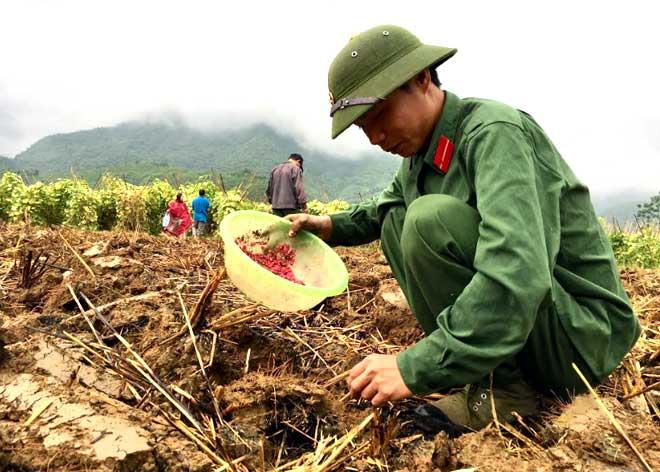 Cán bộ, chiến sĩ lực lượng vũ trang huyện Lục Yên giúp người dân xã Tô Mậu trồng ngô đông.