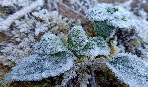 Những ngày qua sương muối đã xuất hiện và duy trì ở vùng cao tỉnh Yên Bái.