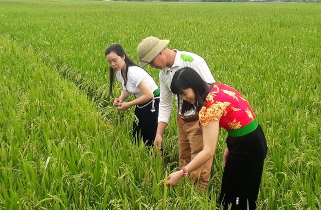 Phụ nữ thị xã Nghĩa Lộ tích cực áp dụng khoa học, kỹ thuật vào sản xuất nông nghiệp, nâng cao đời sống.