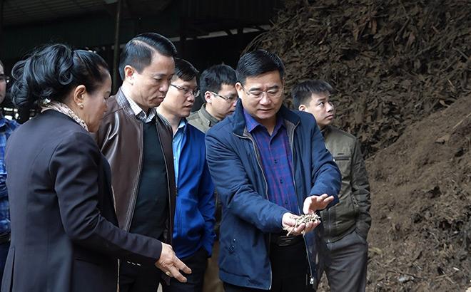 Lãnh đạo huyện Văn Yên kiểm tra tình hình sản xuất của Hợp tác xã Bách Lâm, xã Xuân Tầm.