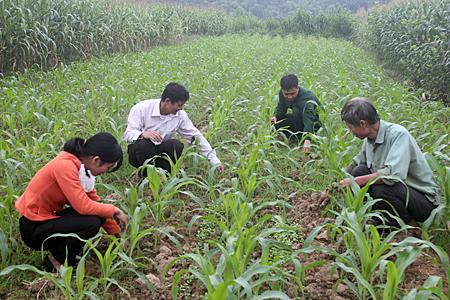 Nhân dân xã Hoàng Thắng, chăm sóc rau màu vụ đông.