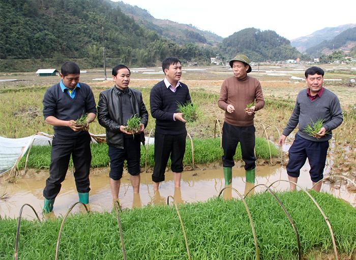 Phó Chủ tịch UBND tỉnh Nguyễn Văn Khánh kiểm tra công tác phòng chống rét cho mạ tại xã Chế Cu Nha.